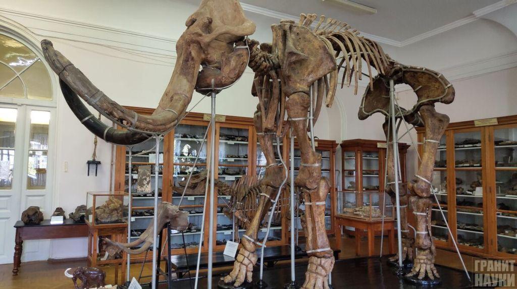 Палеонтологическая гордость Одессы. Фоторепортаж 9