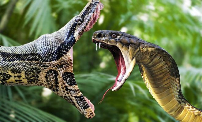 Змеи, ядовитые и целительные 1