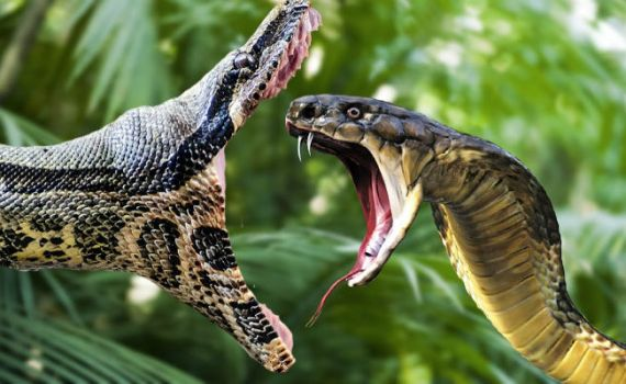 Змеи, ядовитые и целительные 2