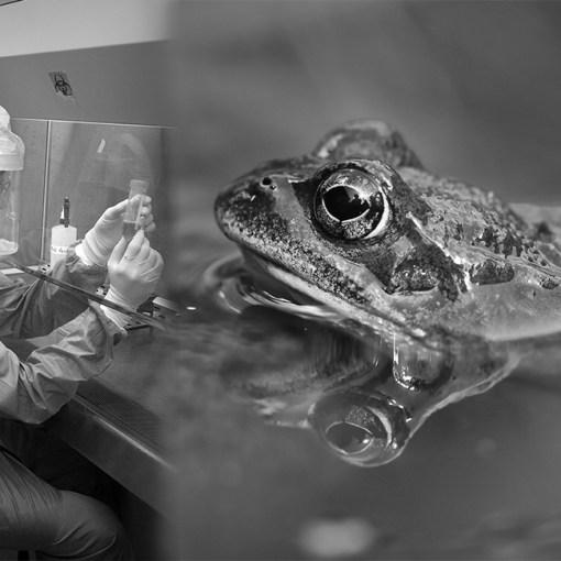 Почему лягушка стала объектом опытов в науке 8