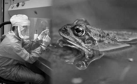 Почему лягушка стала объектом опытов в науке 2