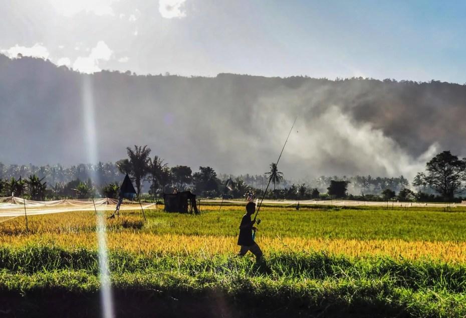 Photo rizières Sumatra