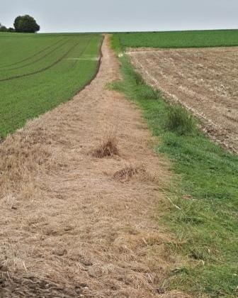 Landwirtschaft ein Grasweg nach Pestizideinsatz, vertrocknetes Gras