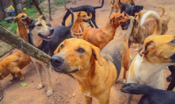 Aumenta el maltrato animal en Bucaramanga