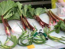 Garlic scapes and rhubarb - two late spring crops.