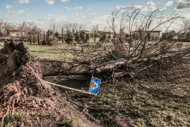 Interrogazione a risposta scritta: Piano abbattimento alberi malati nel territorio comunale