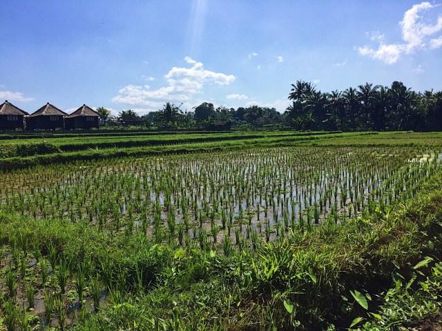 Alt= Bali 3