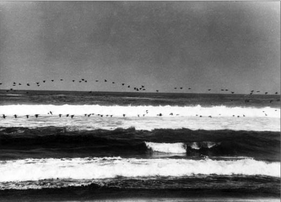 Paravada en el mara 1939