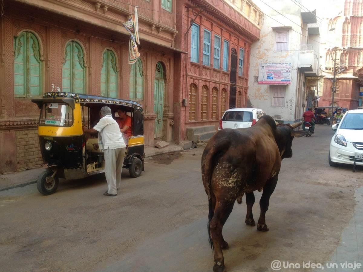 15-dias-rajastan-india-bikaner-unaideaunviaje-10