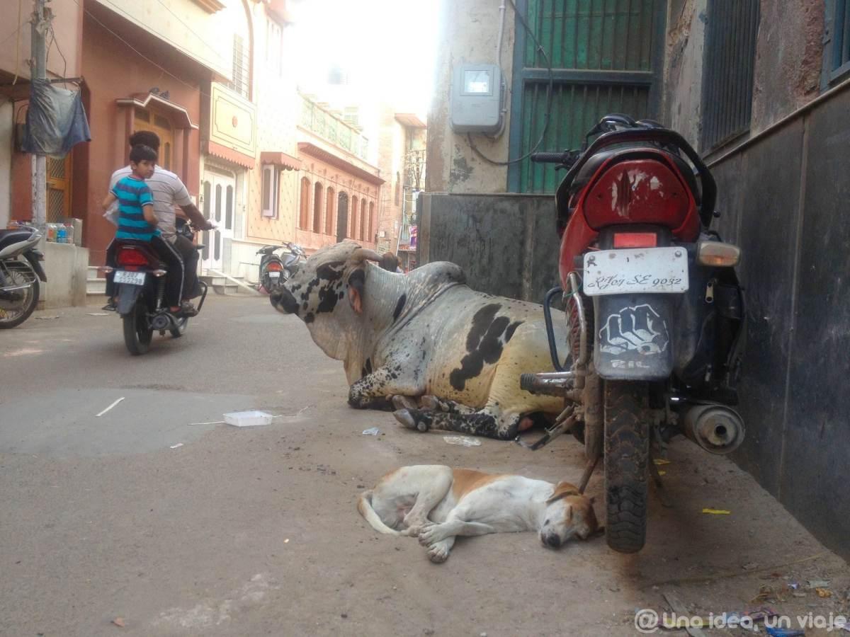 15-dias-rajastan-india-bikaner-unaideaunviaje-11