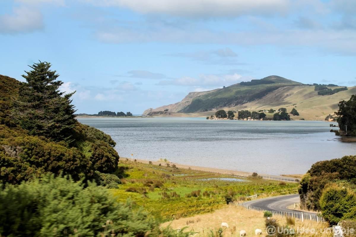 nueva-zelanda-dunedin-peninsula-otago-unaideaunviaje-09