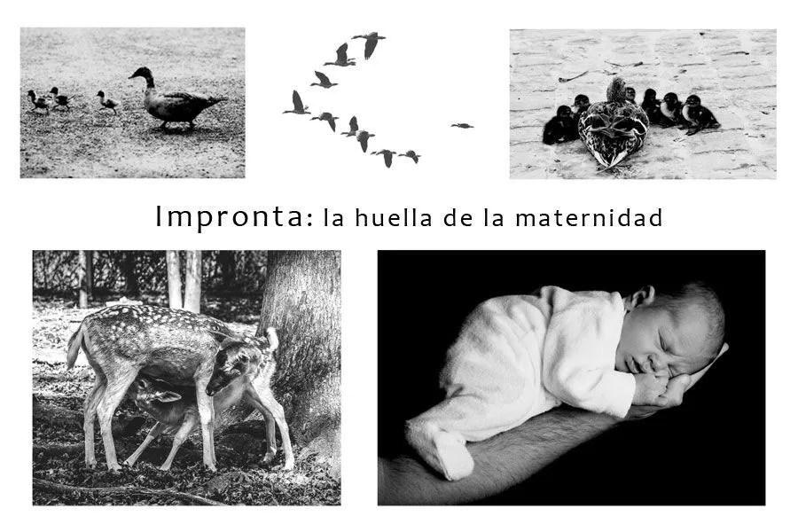 Impronta:  la huella de la maternidad
