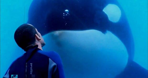 documental-blackfish-01-una-mama-novata