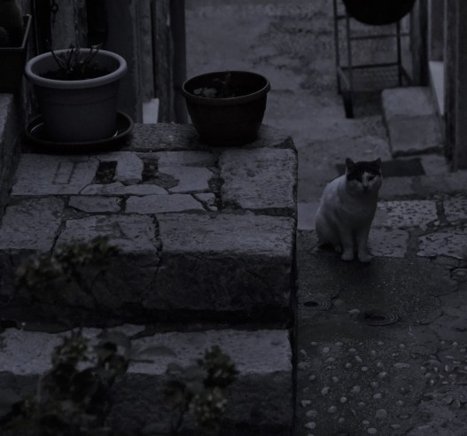 Gato vigía