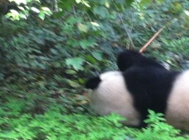 My bamboo!