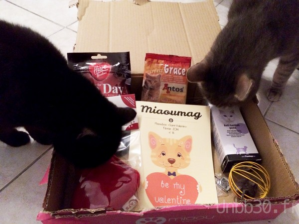mes chats et la miaoubox