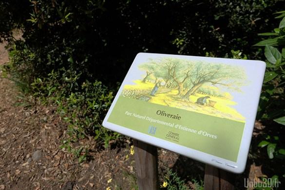 Parc Estienne D'orves oliveraie