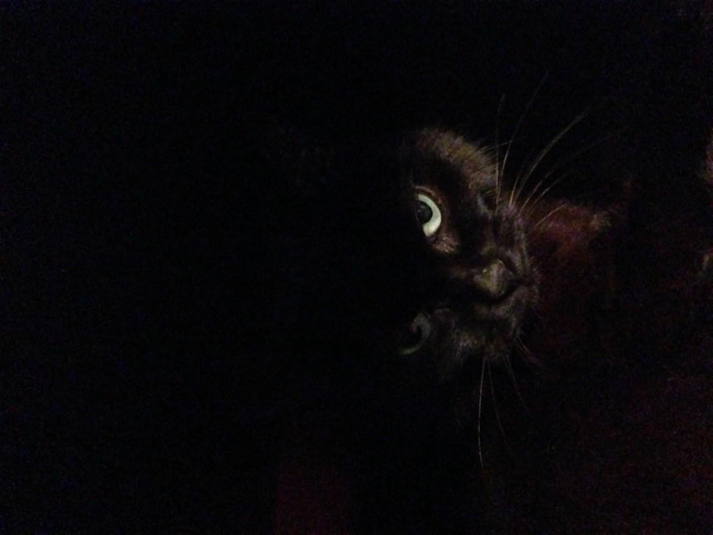 la mort du chat