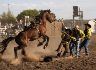 HorseSale