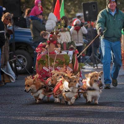 loldog-christmas-corgi-sleigh-2
