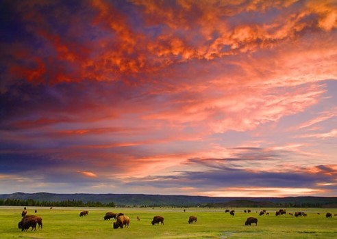 Yellowstone National Park (Ron Niebrugge)