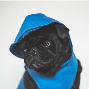 ref the pug