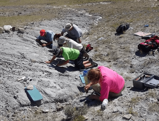 People digging fossils in Montana