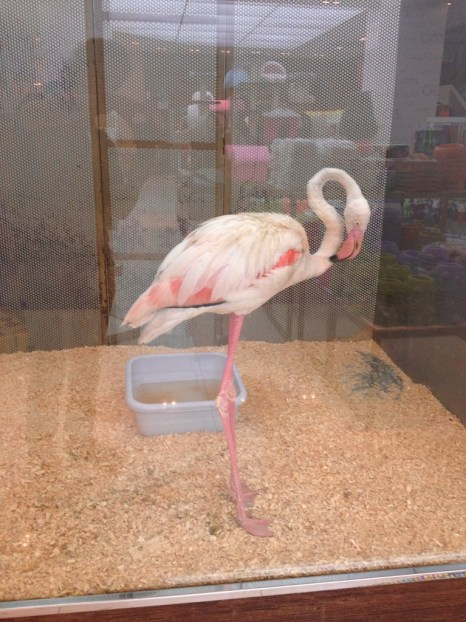 Pet shops are normally places of ill repute but this one with a pink flamingo is outrageously cruel.