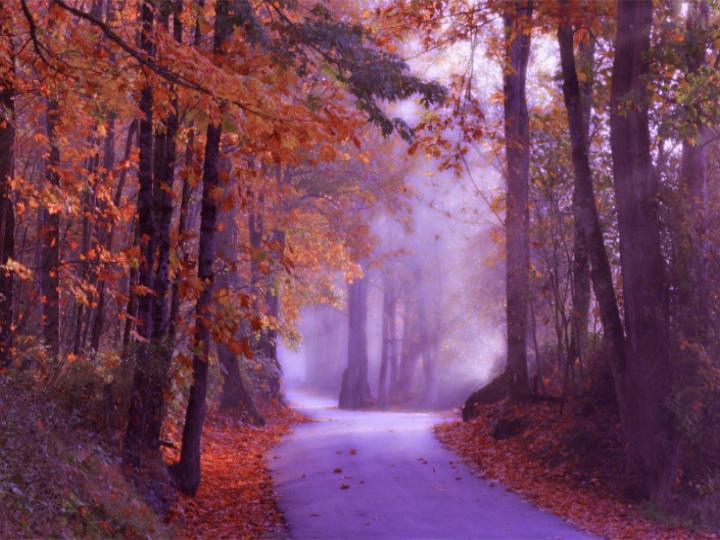 road-in-woods