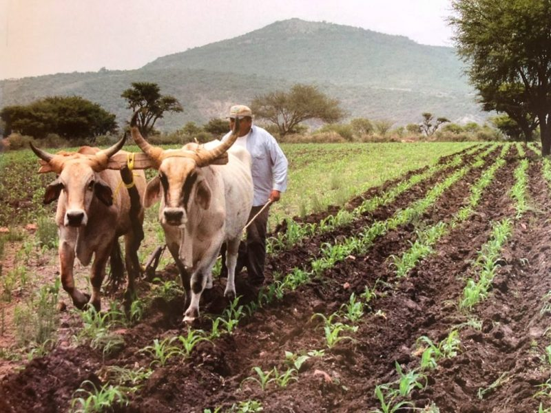 Farming in the mountains near San Miguel - photo by Charlotte Bell
