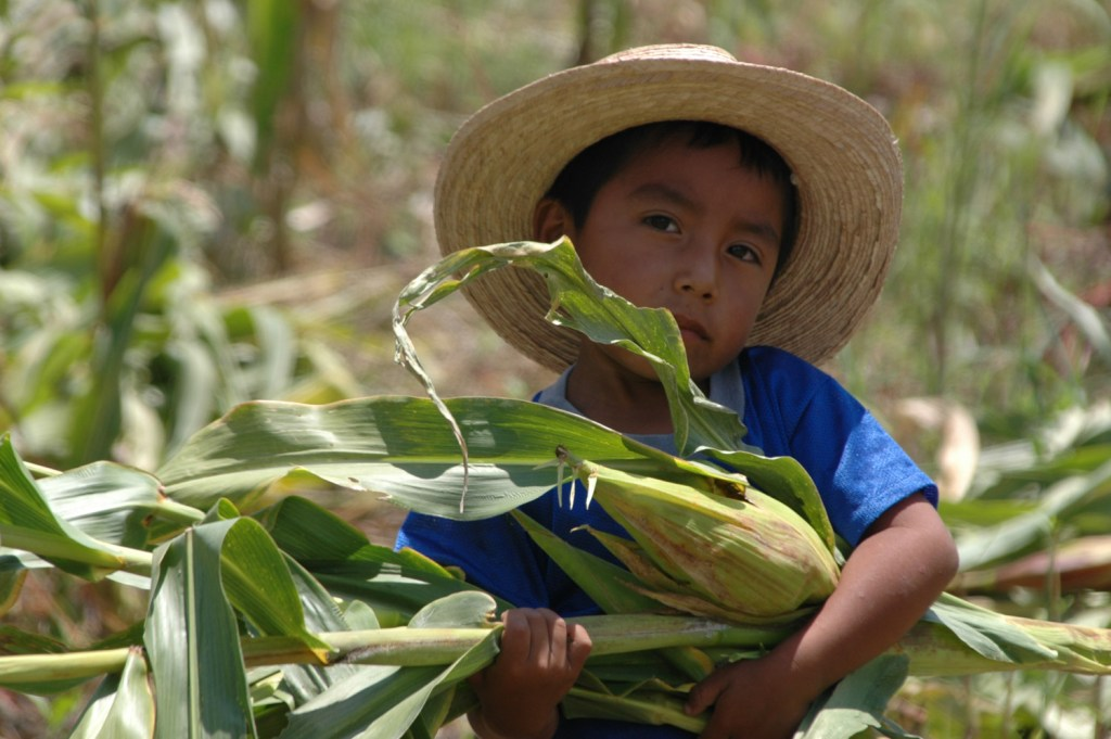 Boy carrying corn in central Mexico - photograph by Charlotte Bell