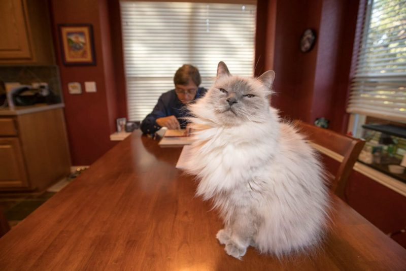 Peter Bay working at home with his cat
