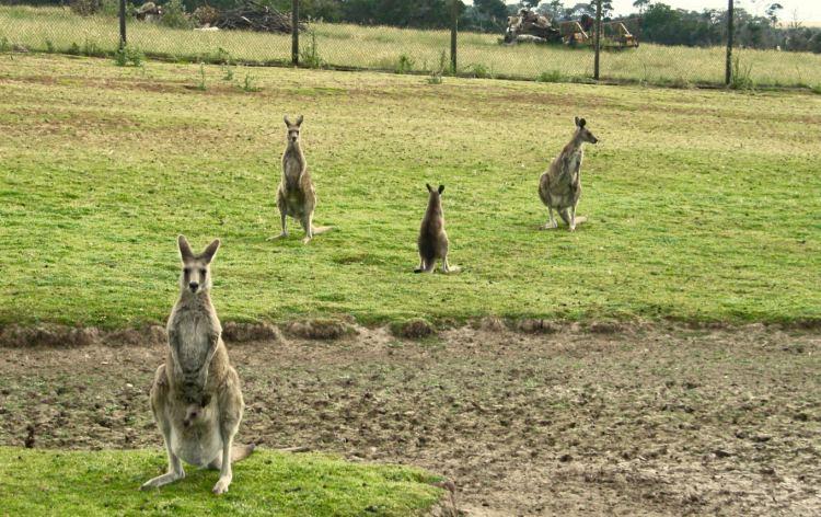 Phillip Island Wildlife Park