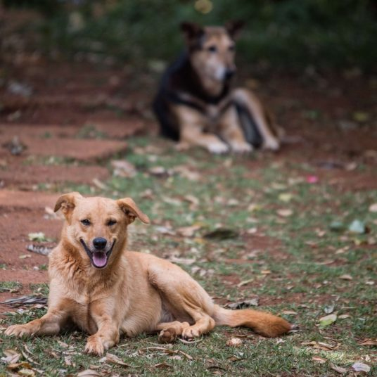 Gilchrist's dogs at the KSPCA