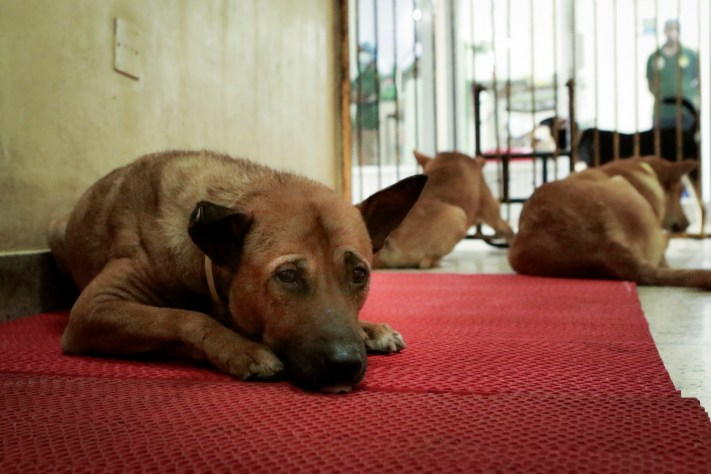 Free-roaming dogs at Obhoyaronno's clinic