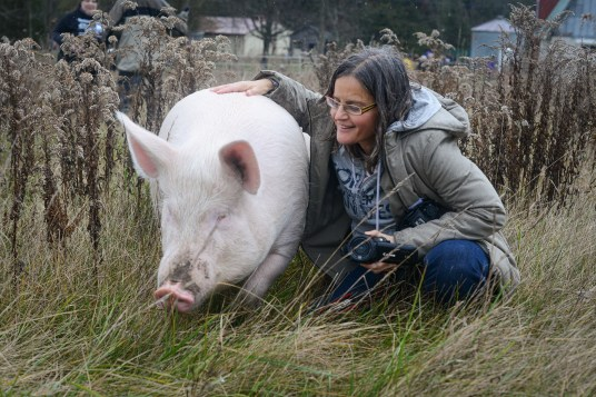 Anita Krajnc with Esther on Esther's first day at Happily Ever Esther Farm Sanctuary. Canada, 2014.