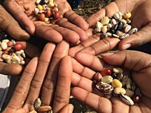 Farmer-seed-systems