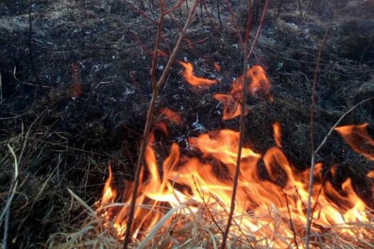 Випалювання трави знищує природу та шкодить вашому здоров'ю!