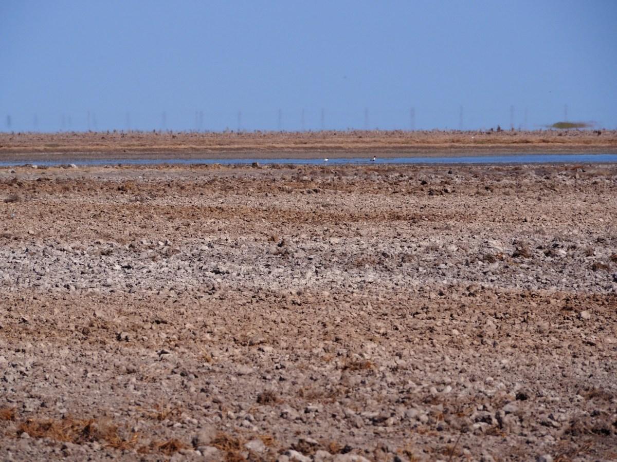 Птахи-безхатьки на вщент розораному озері