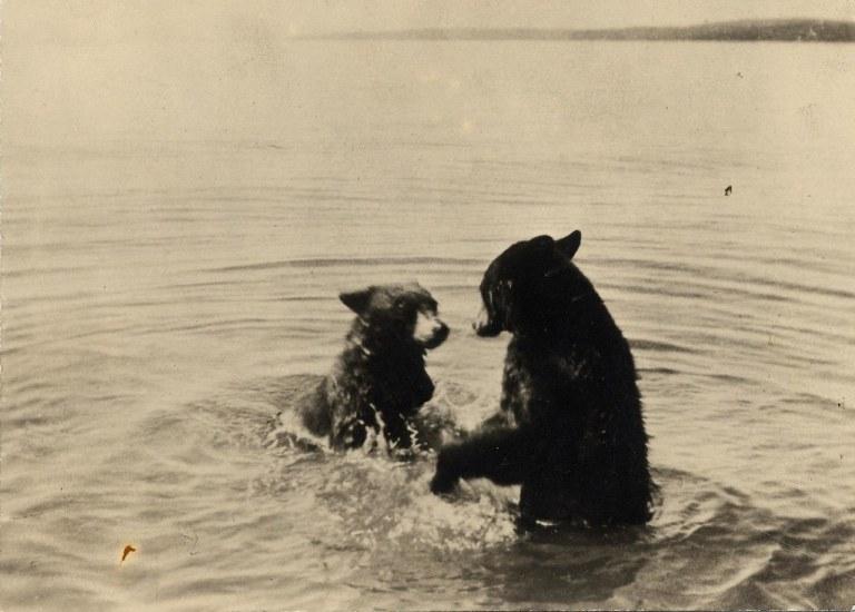 retro bears