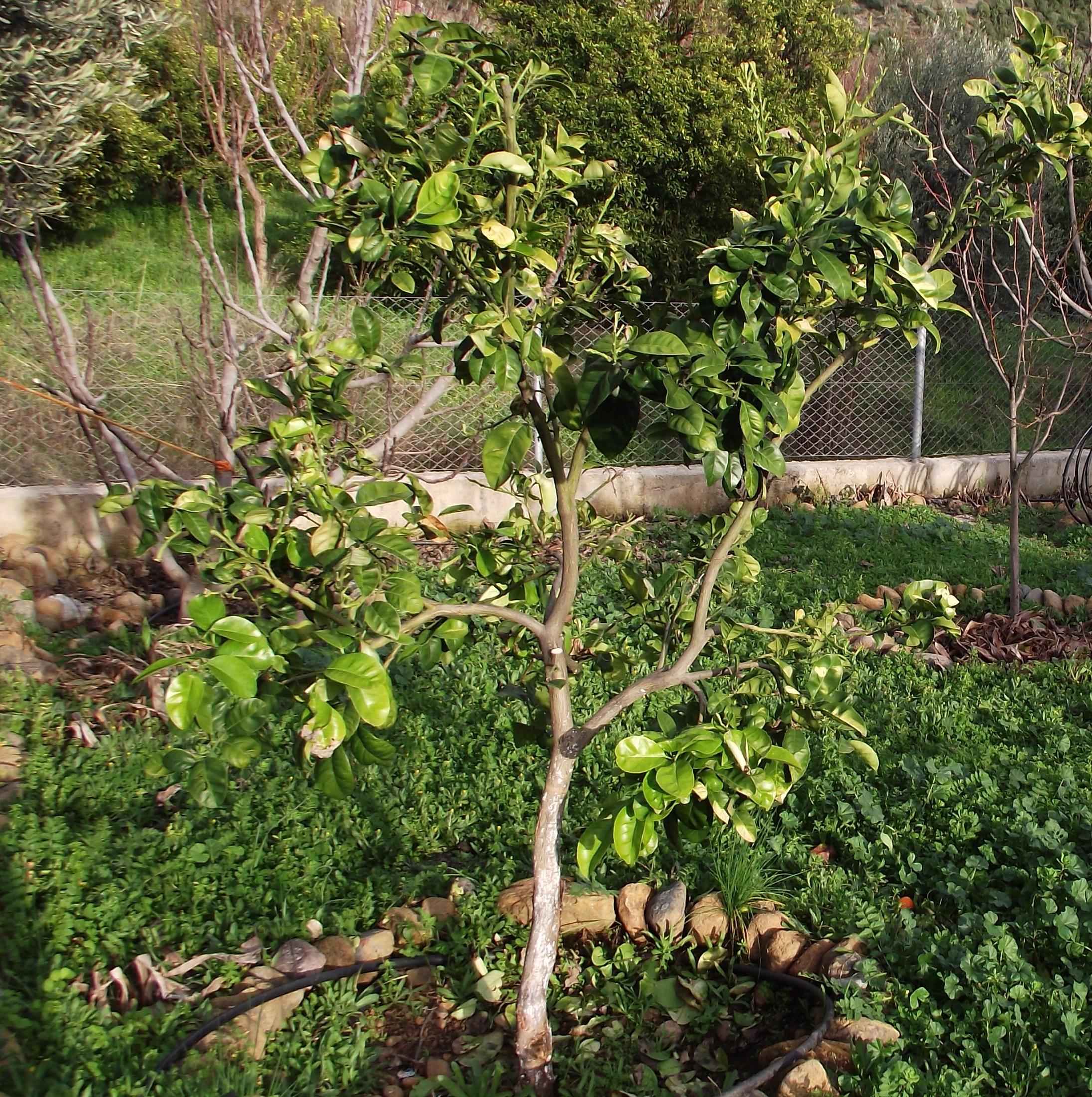 Paloma Tree Images