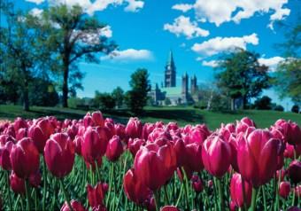 canadian_tulip_festival12