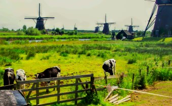 These windmills are among the most photographed attractions in H