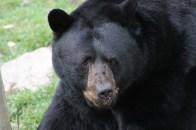 «Bouh ! Je suis l'ours !»