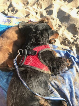 Puppies on the beach - Weekend Wrap-up - (un)Conventional Bookviews