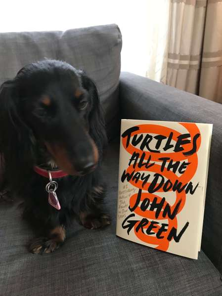 Freddy - (un)Conventional Bookviews - Weekend Wrap-up