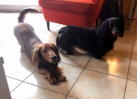 Puppies want to go for a walk - (un)Conventional Bookworms - Weekend Wrap-up