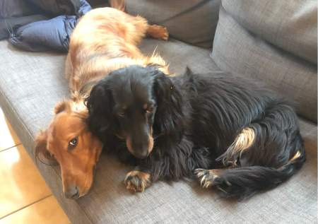 Cuddling Puppies - (un)Conventional Bookworms - Weekend Wrap-up
