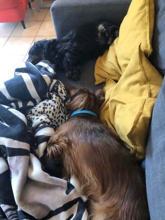 Sleepy Puppies - (un)Conventional Bookworms - Weekend Wrap-up