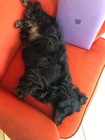 Lazy Freddy - (un)Conventional Bookworms - Weekend Wrap-up